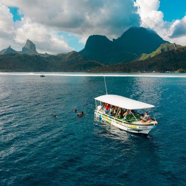 Excursion d'observation des dauphins et des baleines sur l'île de Moorea 001