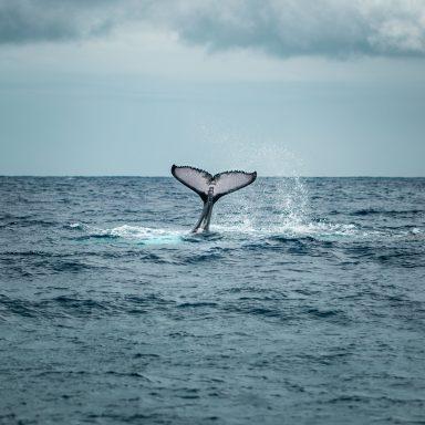 Excursion d'observation des dauphins et des baleines sur l'île de Moorea 002