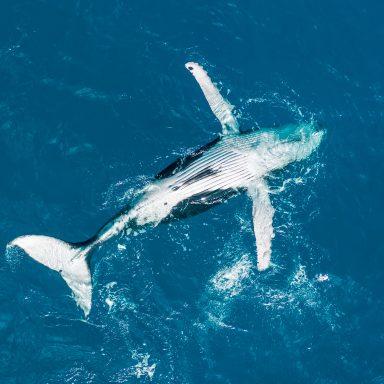 Excursion d'observation des dauphins et des baleines sur l'île de Moorea 003