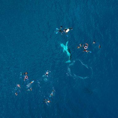 Excursion d'observation des dauphins et des baleines sur l'île de Moorea 005