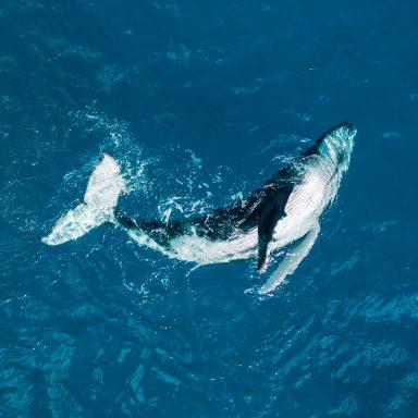 Excursion d'observation des dauphins et des baleines sur l'île de Moorea 006