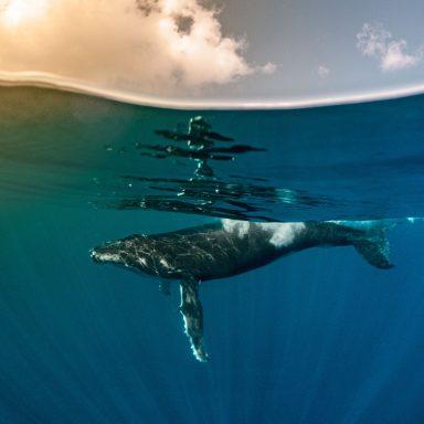 Excursion d'observation des dauphins et des baleines sur l'île de Moorea 010
