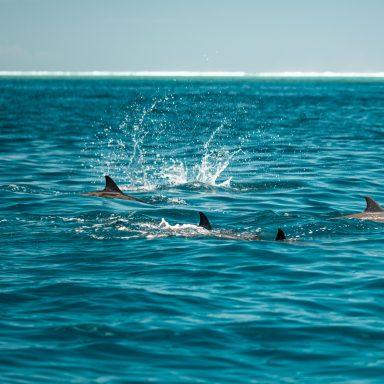 Excursion d'observation des dauphins et des baleines sur l'île de Moorea 012