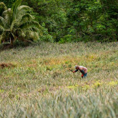 Tour en 4X4 Safari sur l'île de Moorea 010